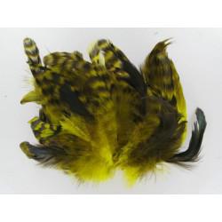 Hahnenschlappen, gelb/schwarz