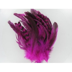 Hahnenschlappen, pink/schwarz