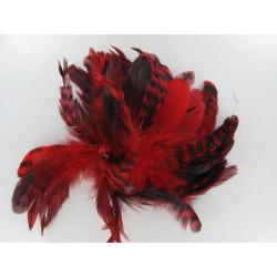 Hahnenschlappen, rot/schwarz