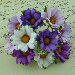Crysanthemen, violett/flieder/weiss, 45mm, 50Stk.