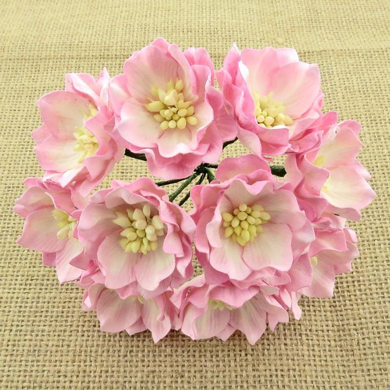 Lotusblume, pink-elfenbein, 25Stk., 35mm