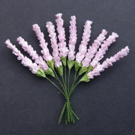 Heidekraut, lila, 10Stk
