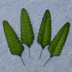 Farn, grün, 70mm, 100Stk.