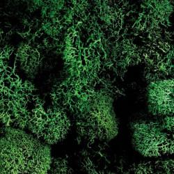 Islandmoos dunkelgrün, 50g