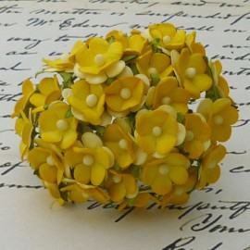 Sweetheartblüte, 2-ton gelb, ca. 15mm, 100Stk.